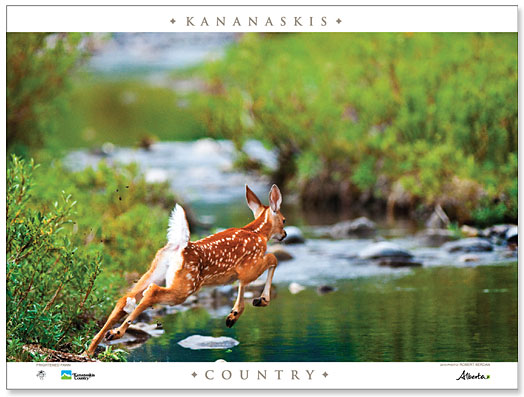 2010_KC_Wildlife_Poster