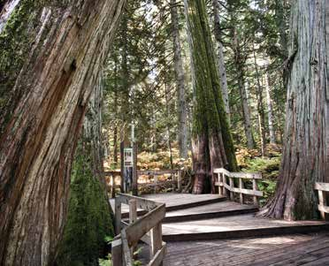 Photo Courtesy of Rob Buchanan Giant Cedars Boardwalk